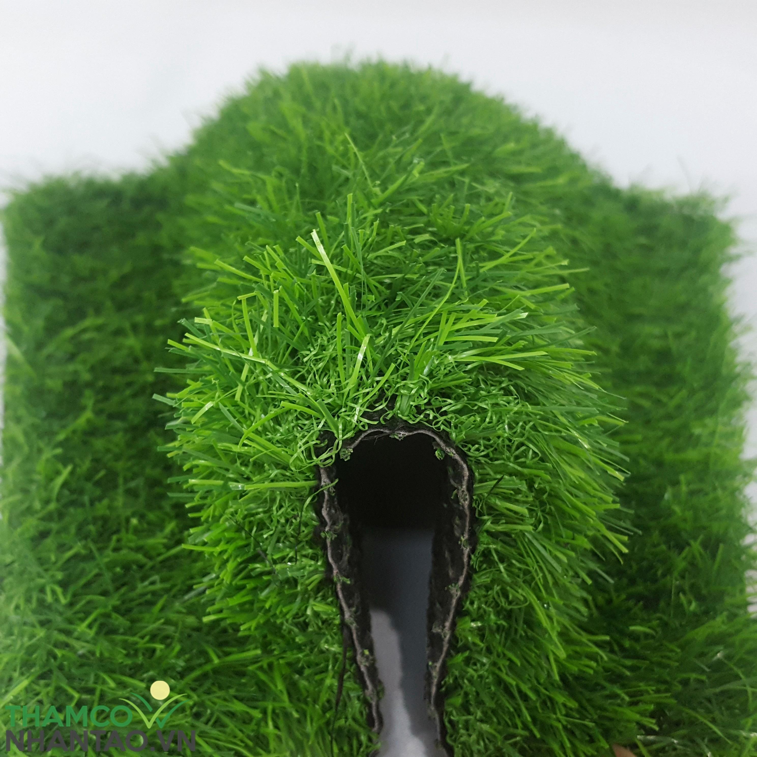 Nên chọn loại cỏ có chiều cao như thế nào? 1