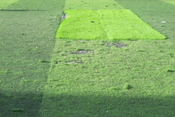 Kinh nghiệm nhận biết cỏ nhân tạo sân bóng kém chất lượng